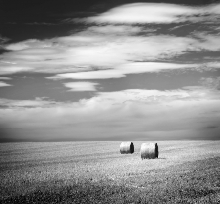 bale: Bales of hay in the fields in summer time harvest