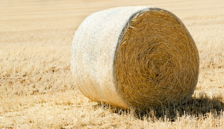 Harvest time with hay bales in the summer sun Stock Photo - 17531745
