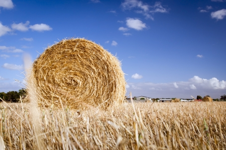 Bales of hay in the fields in summer time harvest photo