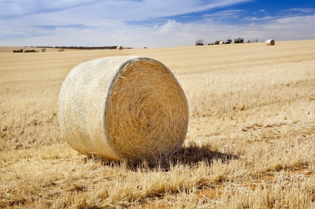 hayroll: Harvest time with hay bales in the summer sun
