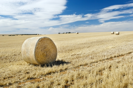 Harvest time with hay bales in the summer sun Stock Photo - 17630588