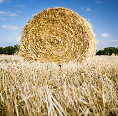 Bales of hay in the fields in summer time harvest Stock Photo - 17630586
