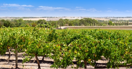 adelaide: Famous wine region the Barossa Valley near Adelaide, South Australia