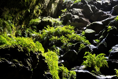 Looking back toward a cave opening with green ferns growing on the rocks Stock Photo - 22022645