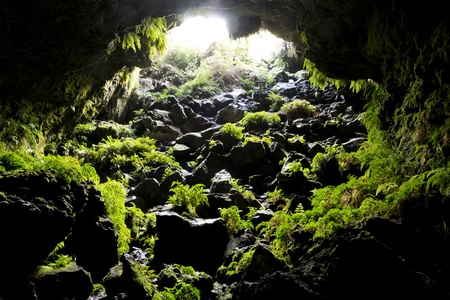Looking back toward a cave opening with green ferns growing on the rocks Stock Photo - 22029133