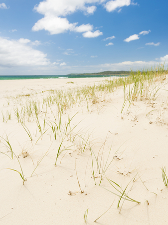 sea grass: Bright blue sky with white sand and green grass on the sand dunes Stock Photo