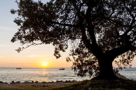 massive:  Massive tree silhouetted at the coast on sunset with boats Stock Photo