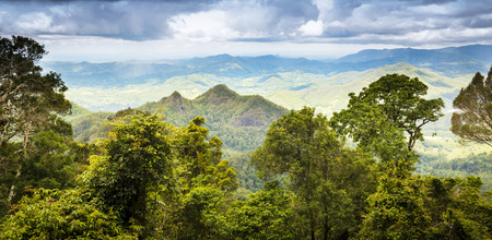 Queensland rainforest in the Gold Coast hinterland near Mount Warning photo