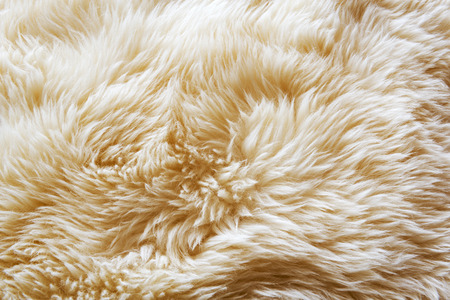 Luxurious wool texture from a white sheepskin rug photo