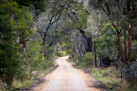 australia landscape: Dirt road winding through a dense forest in winter in shallow focus