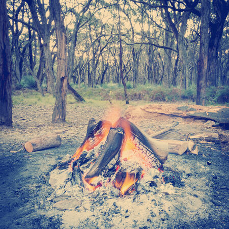 woodfire: Campfire burning bright in the forest at dusk