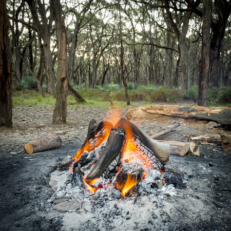 woodfire: Campfire burning bright in the forest at dusk Stock Photo