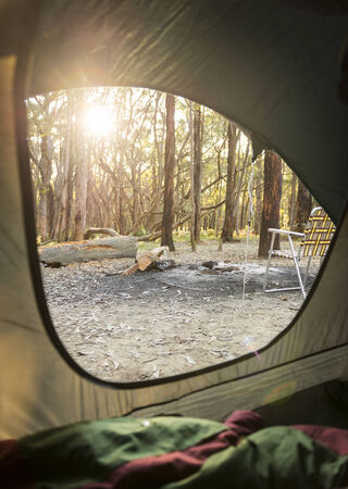 camping tent: Sunrise through the woods out camping as viewed from inside a tent