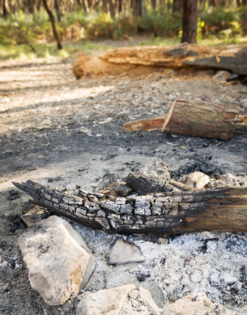 woodfire: Remains of a campfire with charcoal wood log