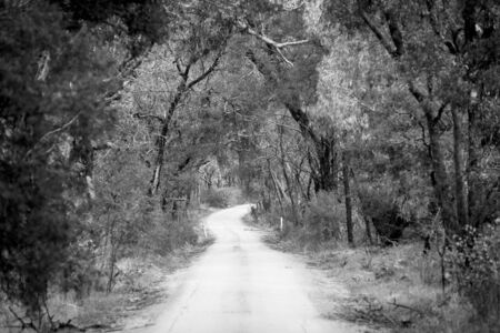dense forest: Dirt road winding through a dense forest in winter in shallow focus in black and white