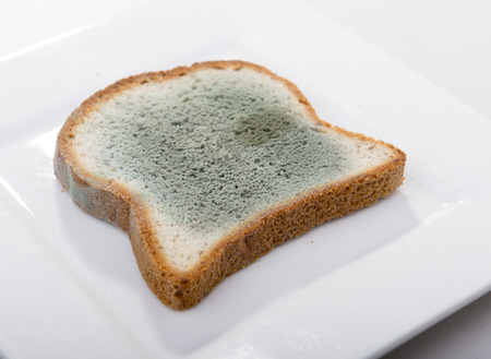 mouldy: Mould growing rapidly on mouldy bread in green and white spores