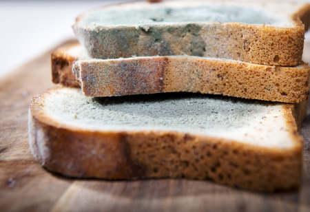 mouldy: Mold growing rapidly on moldy bread in green and white spores