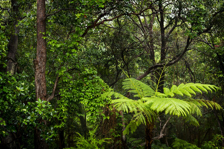 thick growth: Rainforest landscape of ferns and trees wet with rain in the rainforest Stock Photo