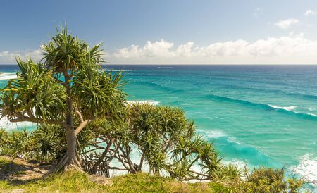 qld: Pandanus palms and rocky headlands along the Queensland coastline Stock Photo