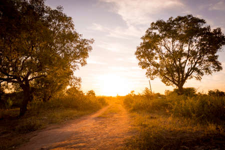 africa tree: Sunset beams down a road in Africa with trees around it and long grass Stock Photo