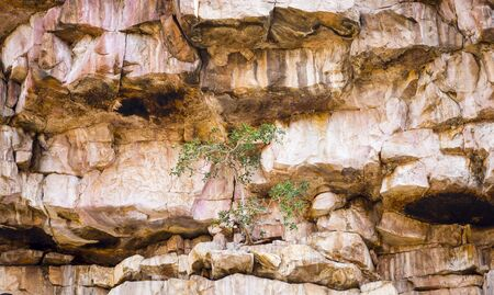 cliff face: Green tree grows against the odds on a barren rocky cliff face Stock Photo