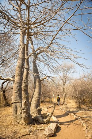 Hiking in Africa along a dry and hot hiking trail in Botswana photo