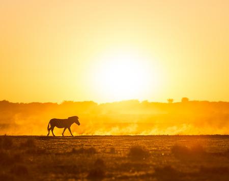 アフリカ ボツワナ、アフリカの塵のシルエット ゼブラと日没の風景