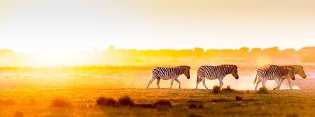 Afrika Sonnenuntergang Landschaft mit silhouetted Zebra im Staub von Botswana, Afrika