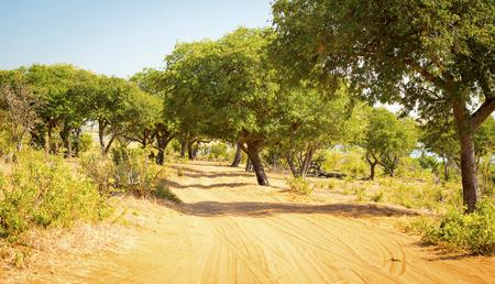 chobe national park: Driving the sandy tracks while on safari in Chobe National Park, Botswana, Africa Stock Photo