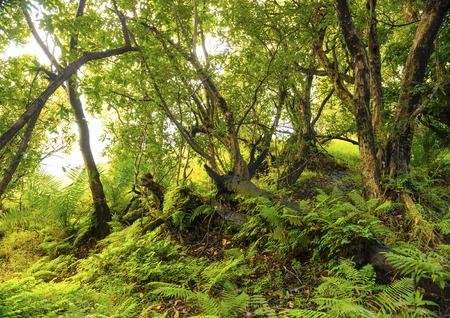 Afrikanische Dschungellandschaft mit vibrierenden grünen Farne und Bäume