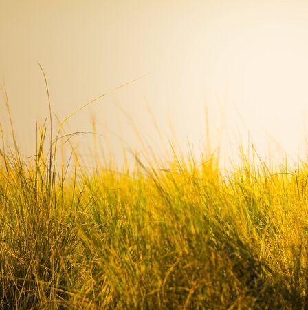 llanura: enfoque superficial al atardecer en la hierba en la sabana africana