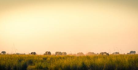 llanura: Manada de elefantes de caminar detrás de distancia en las llanuras africanas