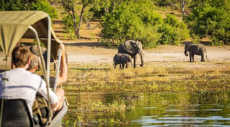 chobe national park: Tourists watching an elephant while on safari in Botswana, Africa
