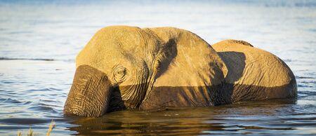 botswana: Elephant in Chobe National Park, Botswana, Africa