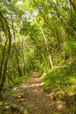 smuts: Smuts Track walking trail for hiking Table Mountain in Cape Town, South Africa