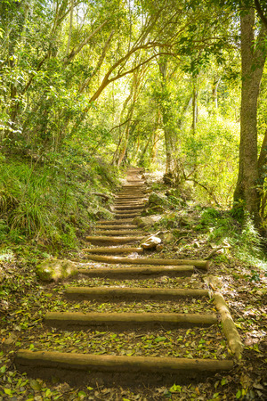 smuts: Stairway on Smuts Track walking trail for hiking Table Mountain in Cape Town, South Africa