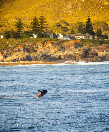 Hermanus, South Africa during whale watching season