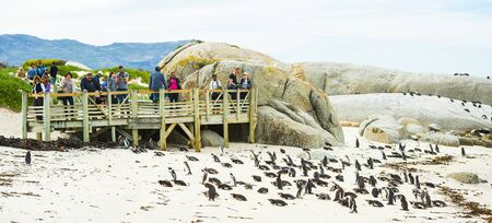 CAPE TOWN, SOUTH AFRICA - SEPTEMBER 1: Unidentified people viewing African Penguins (spheniscus demersus) on September 1 2015 in Cape Town, South Africa. Boulders Beach is a popular location for viewing African Penguins.