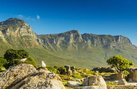 Seagulls on rocks below the Twelve Apostles in South Africa
