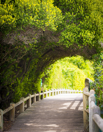 nature backgrounds: Nature boardwalk through green archway Stock Photo