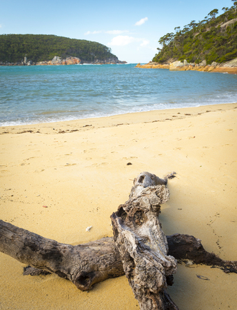 wilsons promontory: Driftwood at Refuge Cove, Wilsons Promontory National Park, Victoria, Australia