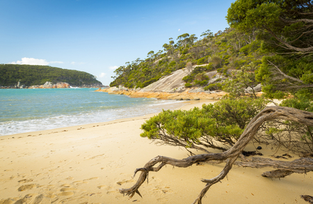 wilsons promontory: Weathered trees line beach at Refuge Cove, Wilsons Promontory National Park, Victoria, Australia Stock Photo