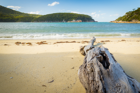 wilsons promontory: Driftwood on beach at Refuge Cove, Wilsons Promontory National Park, Victoria, Australia