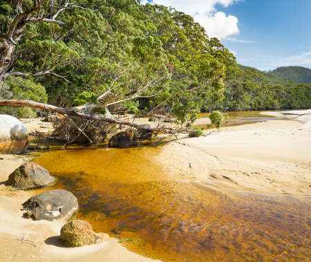 wilsons promontory: Tannin river of Sealers Cove, Wilsons Promontory National Park, Victoria, Australia Stock Photo