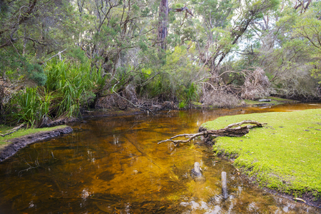 wilsons promontory: Fresh water creek by Refuge Cove Campground in Wilsons Promontory National Park, Victoria, Australia Stock Photo