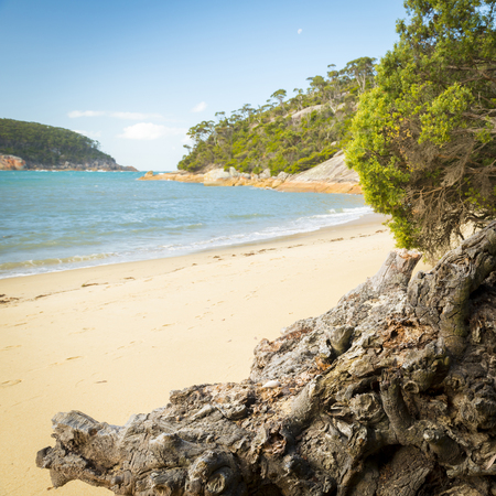 wilsons promontory: Weathered tree roots on beach at Refuge Cove, Wilsons Promontory National Park, Victoria, Australia Stock Photo