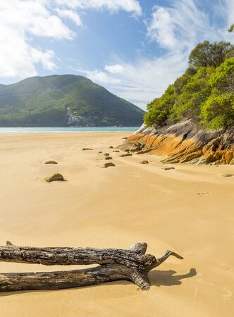 wilsons promontory: Driftwood on beach at Sealers Cove, Wilsons Promontory National Park, Victoria, Australia Stock Photo