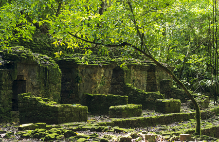PALENQUE, MEXICO - NOVEMBER 29: Mayan ruins taken over by lush jungle on November 29, 2016 in Palenque. Palenque was declared a world heritage site by UNESCO in 1987.