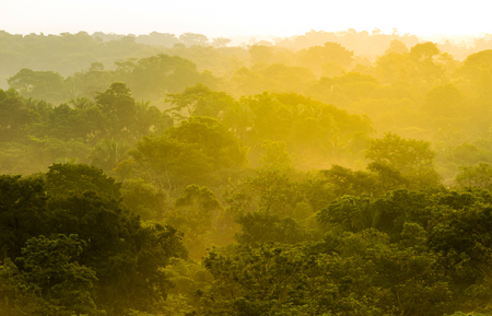 Golden sunset light filtering through the treetops in the jungle of Mexico