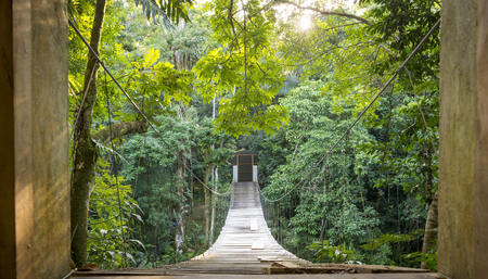 Escape into solitude with hanging jungle bridge scene